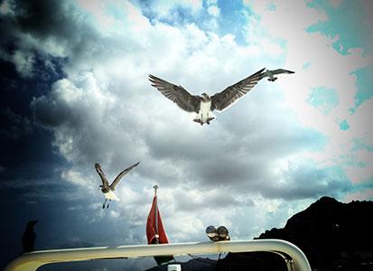 Bird watching in Fahal Islands